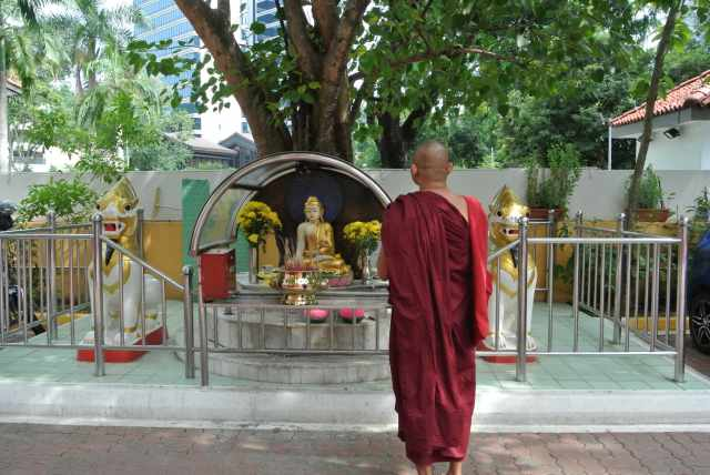 Bhante Cakkapala paying reverence to the Bodhi Tree a progeny of the ancestral Bodhi Tree from Mangala Vihara (Buddhist Temple),